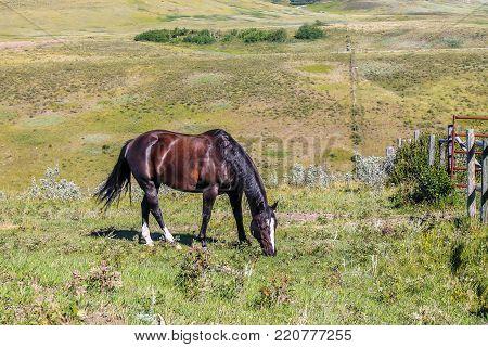 Horse grazing, Glenbow Ranch Provincial Recreation Area, Alberta, Canada