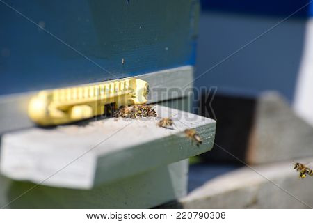 Hives in an apiary. Bees flying to the landing boards and enter the hive, bee flying to hive. Bees defending hive.