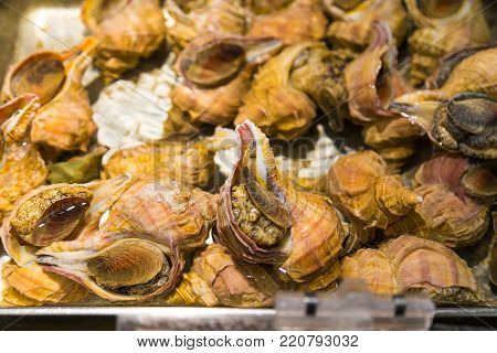 Fresh conch, marine molluscs, being sold at Japanese fresh market in Otaru, Hokkaido, Japan