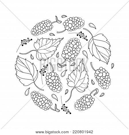 Vector round composition with outline Mulberry or Morus with ripe berry and leaf in black isolated on white background. Contour drawing of Mulberry bunch for summer design and coloring book.