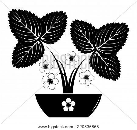 vector flowering strawberry plant in bowl isolated on white background