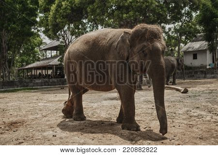 Background elephant in the shade