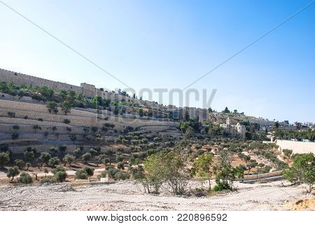 Horizontal picture of local vegetation in the area between outside the Wall of the Old City and the Jewish Cemetery in Mount Olives in Jerusalem, Israel.