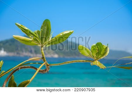 Flower at the sea with green Mountain and blue sky Background,Very beautyful view in My Holliday