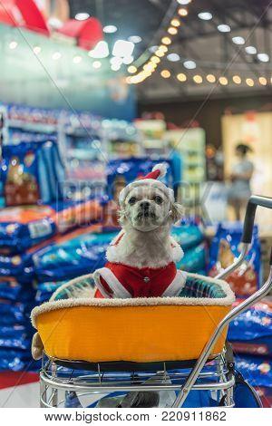 Sweet Dog With Santa Claus Dress Look Something