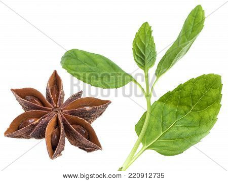 Anise star with mint leaves on white background