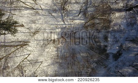 Top down aerial drone image of a forest in the middle of winter.  No leaves on the trees and snow covering the ground.