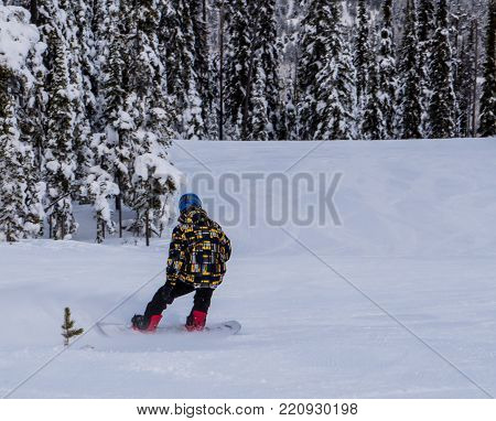 A snowboarder power carving on Blacktail Mountain in Montana with a wall of snow flocked trees in the background.