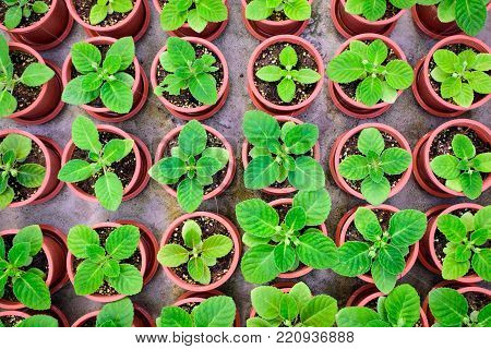 Potted seedlings growing in little brown pots arrange in top view for save the wolrd concept.