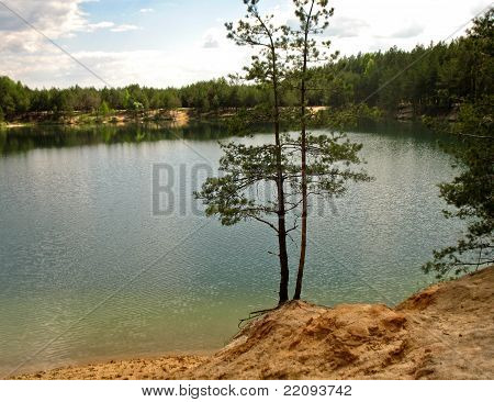 Two Pine Trees By The Lake