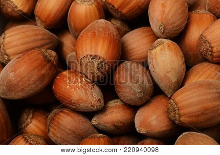 Fresh Hazel Nuts For Autumn Season