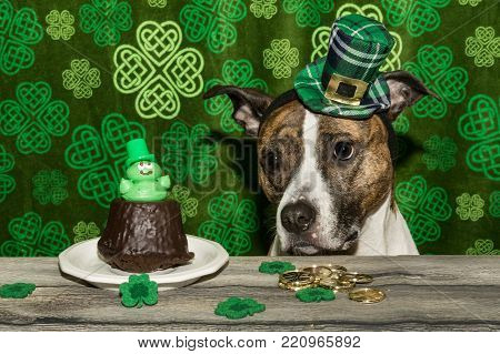 A cute dog begging for Saint Patrick's day cupcakes.
