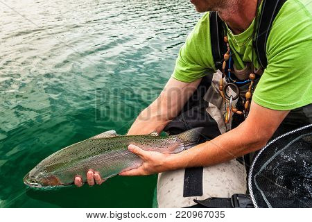 Detail shot of releasing the catch of nice Rainbow trout back to water from bellyboat, Jesenice, Slovenia. Flyfishing catch and release lifestyle and nature theme.