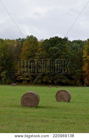 Rolled hay bails in a bright green field under a cloudy sky, Ithaca, NY., Fall 2017