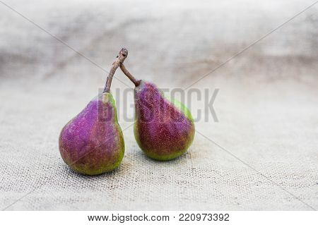 Pears. Pears Harvest. Fruit Background. Fresh Organic Pears On Old Sacking. Pear Autumn Harvest. Jui