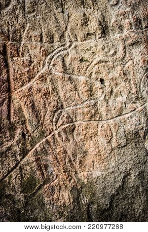 Cows on stone, petroglyph art. Exposition of Petroglyphs in Gobustan near Baku, Azerbaijan. poster