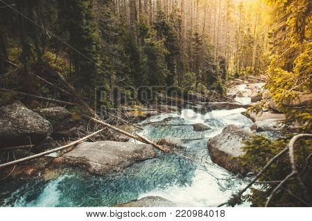 Mighty mountain river flowing through the coniferous forest in the Tatras Mountains in Slovakia. The power of wild virgin nature. Artistic retouching.