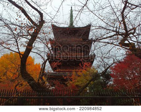 Five storied Pagoda of Kanei-ji in Ueno park with autumn colorful leaves around, Tokyo, Japan