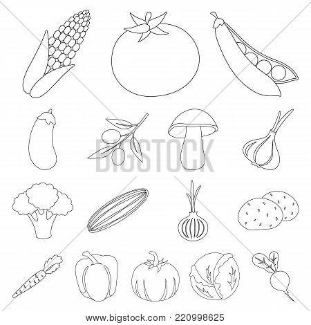Different kinds of vegetables outline icons in set collection for design. Vegetables and vitamins vector symbol stock  illustration.