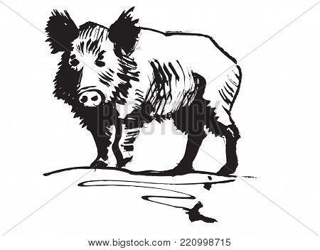 Boar. Wild pig. Stylized vector black and white image