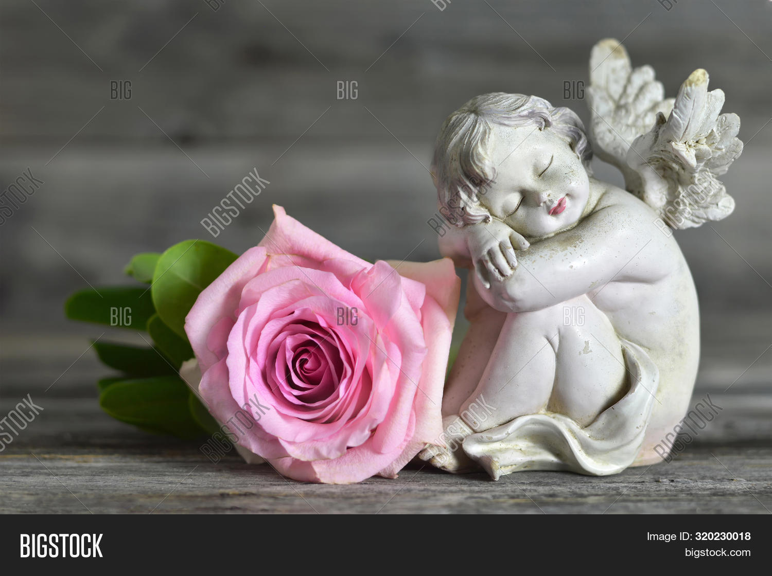 Guardian Angel Rose On Image Photo