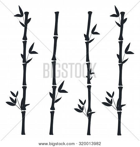 Black Bamboo Branches And Leaves. Bamboo Stems.