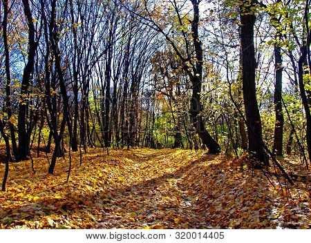 Autumn (fall) Season. The Autumn Forest With The Path (road) That Strewn With Yellow Leaves. Scenic