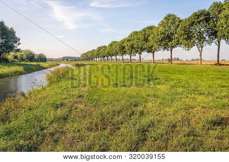 Seemingly Endless Row Of Tall Trees To The Right And A Small Stream To The Left. The Photo Was Taken