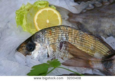 Frischer Fisch am Fischmarkt