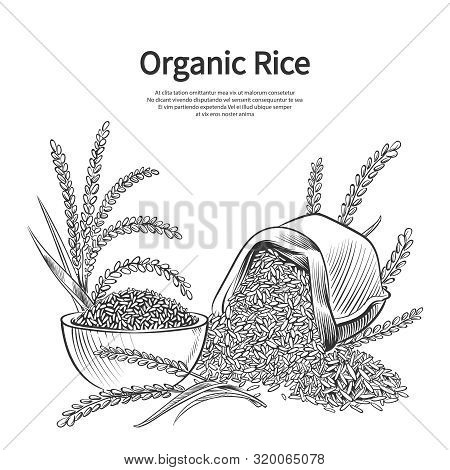 Hand Drawn Rice Background. Rice Sack, Bowl And Ears Vector Illustration. Rice Harvest, Sack Crop Bo