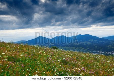 Beautiful summer sunset and landscape - wildflowers on hills in the evening. Meadow or grassland. Carpathian mountains. Ukraine. Europe. Travel background.