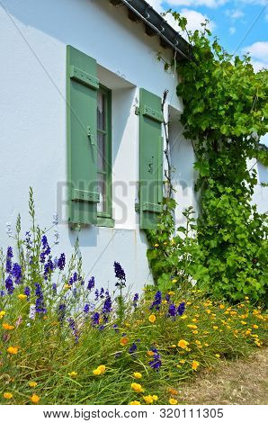Sunny View In Front Of A Green Window With Shutters Of An Old Farm House, With A Bush Of Lowers And