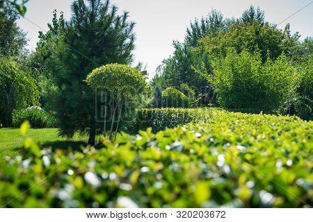 Shrub Tree, Geometric Shape, Garden Decoration, A Grass Bush Row With Modern Style, Green Hedge In H