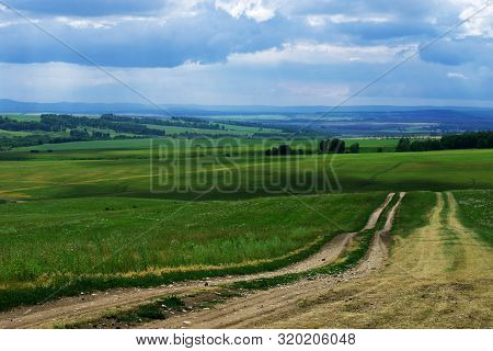 Field Dirt Road Goes Into The Distance Through Agricultural Fields With Green Grass Past The Forest,