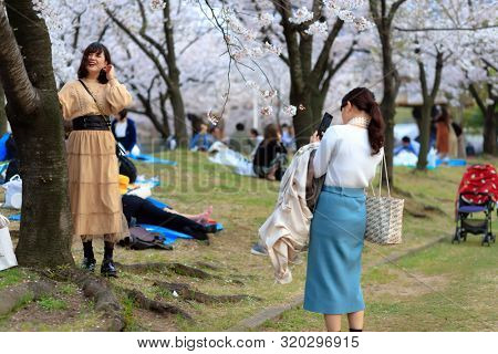 OSAKA, JAPAN, April 7, 2019 : Japanese are taking pictures under flowered cherry trees at the Kema Sakuranomiya Park to celebrate new spring .