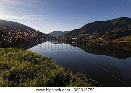 Scenic View Of The Douro River With Terraced Vineyards Near The Village Of Foz Coa, In Portugal; Con