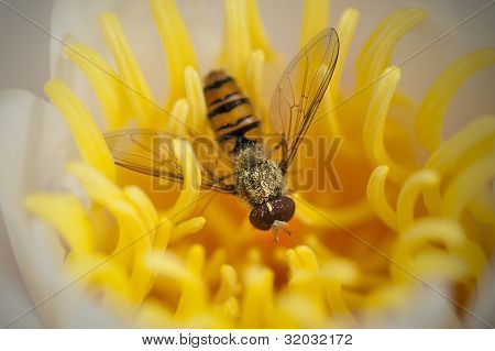Wasp in a yellow flower