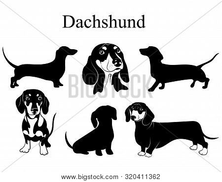 Dachshund Set. Collection Of Pedigree Dogs. Black White Illustration Of A Dachshund Dog. Vector Draw