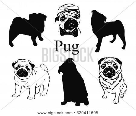 Set Of Pugs. Collection Of Pedigree Dogs. Black And White Illustration Of A Pug Dog. Vector Drawing