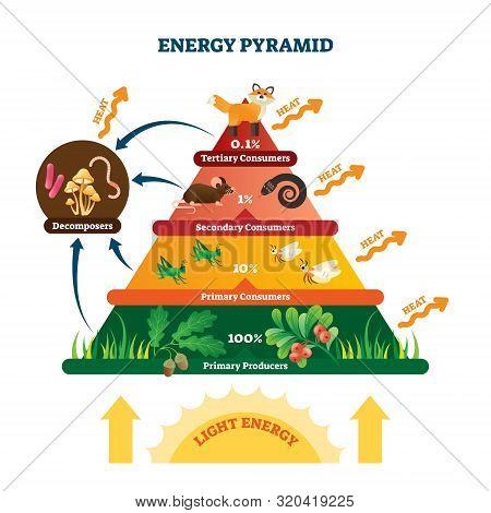 Energy Pyramid Vector Illustration. Labeled Biomass Representation Graphic. Educational Bioproductiv