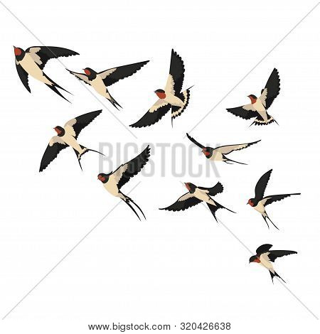 A Flock Of Flying Swallows. Vector Illustration Of Cartoon Swallows For Children. Color Drawing Floc