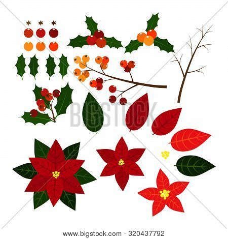 Christmas Elements With Set Of Holly Leaves,berries And Red Poinsettia, Christmas Flower. Isolated O