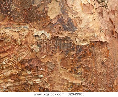 Close up shot of peeling bark on tree trunk for texture and background poster