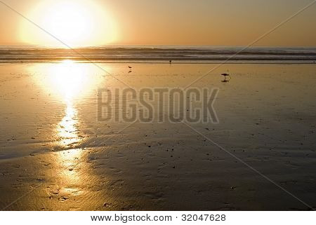 Sunset On The Beach With Shore Birds
