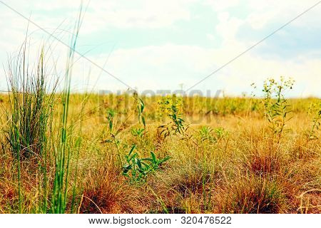 Native Grass Prairies On Blue Cloudy Sky Background.