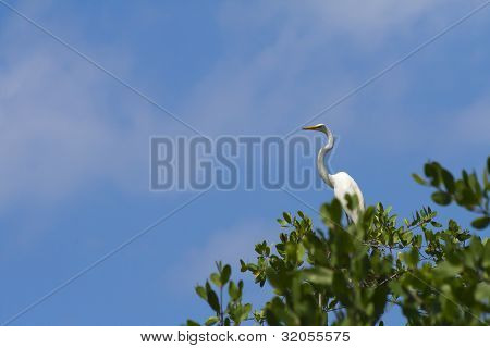 White Heron High In Tree
