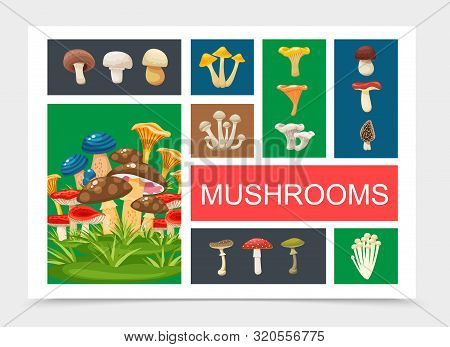 Flat Forest Mushrooms Composition With Shiitake Chanterelle Morel Toadstools Russula Champignon Hone