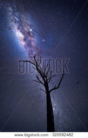 Milky Way And Galactic Core Shining Brightly Over Old Dead Tree In Nsw Australia