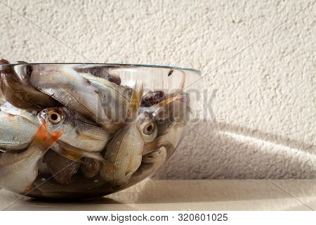 Raw Many Dead Bluefish Deep In A Glass Plate In Outdoor