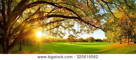 Beautiful Panoramic Autumn Scenery With A Large Tree On A Green Meadow And The Setting Sun Shining T